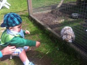 Gabriel hälsar på kaninerna vid pannkaksladan i Höganäs.
